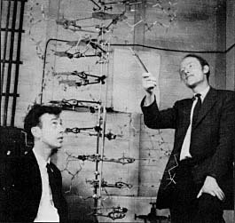 Watson and Crick showing their model of DNA
